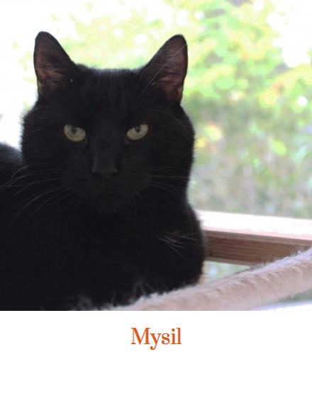 mysil
